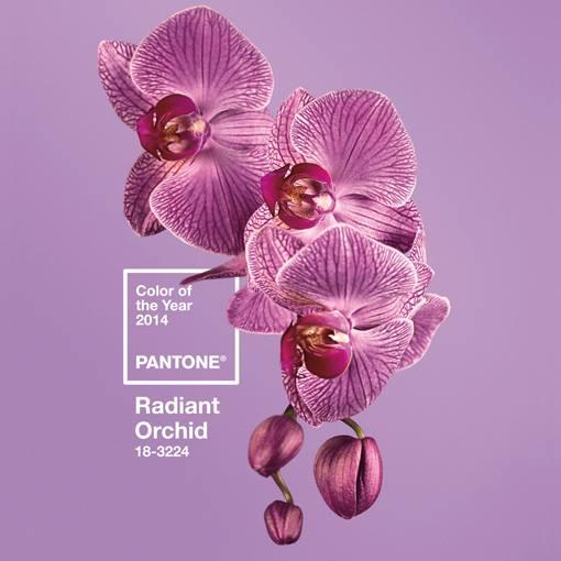 Radient Orchid Pantone colour 2014
